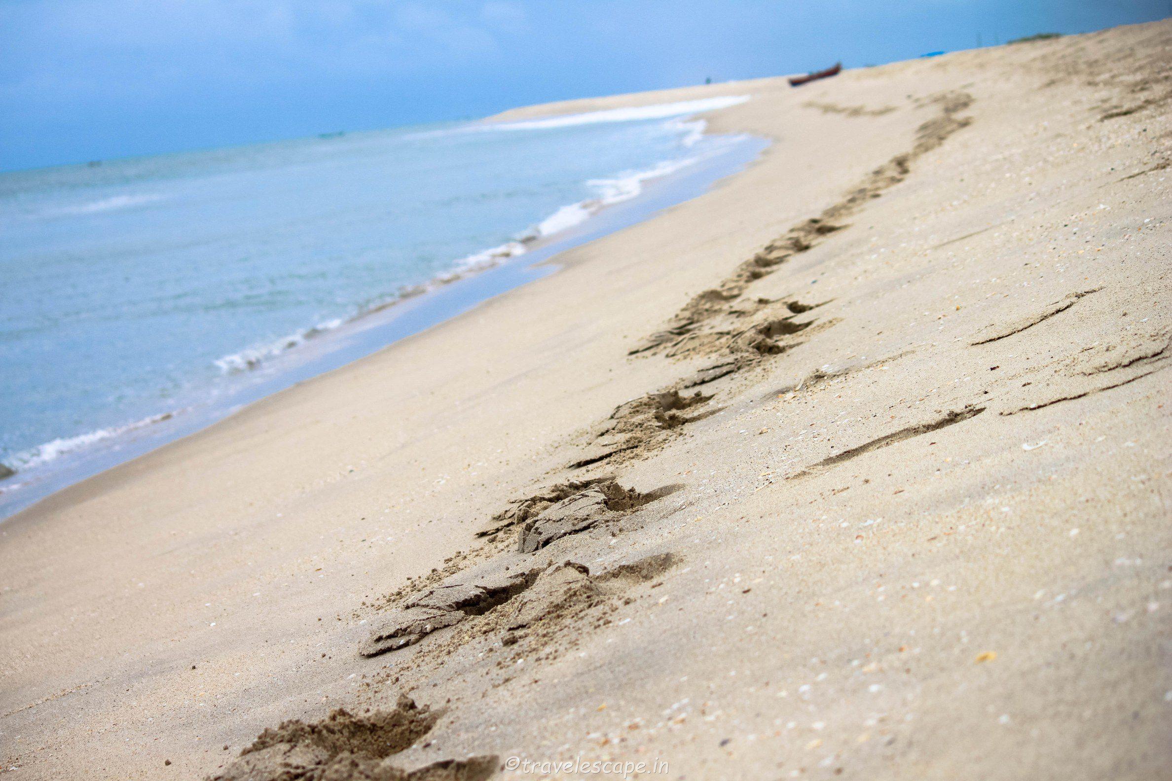 beach dhnushkodi