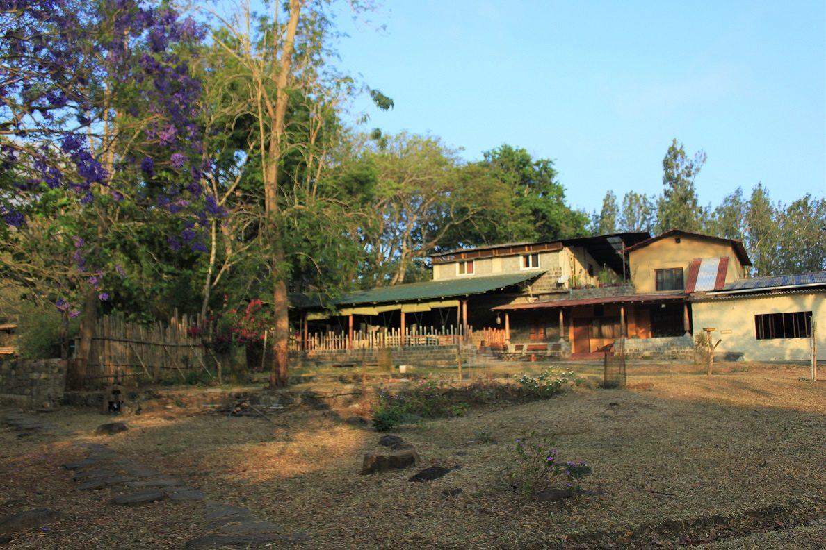 Jungle hut resort