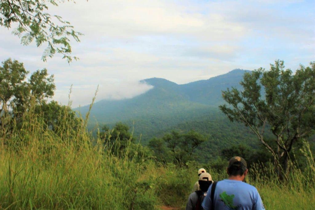 JungleTrek
