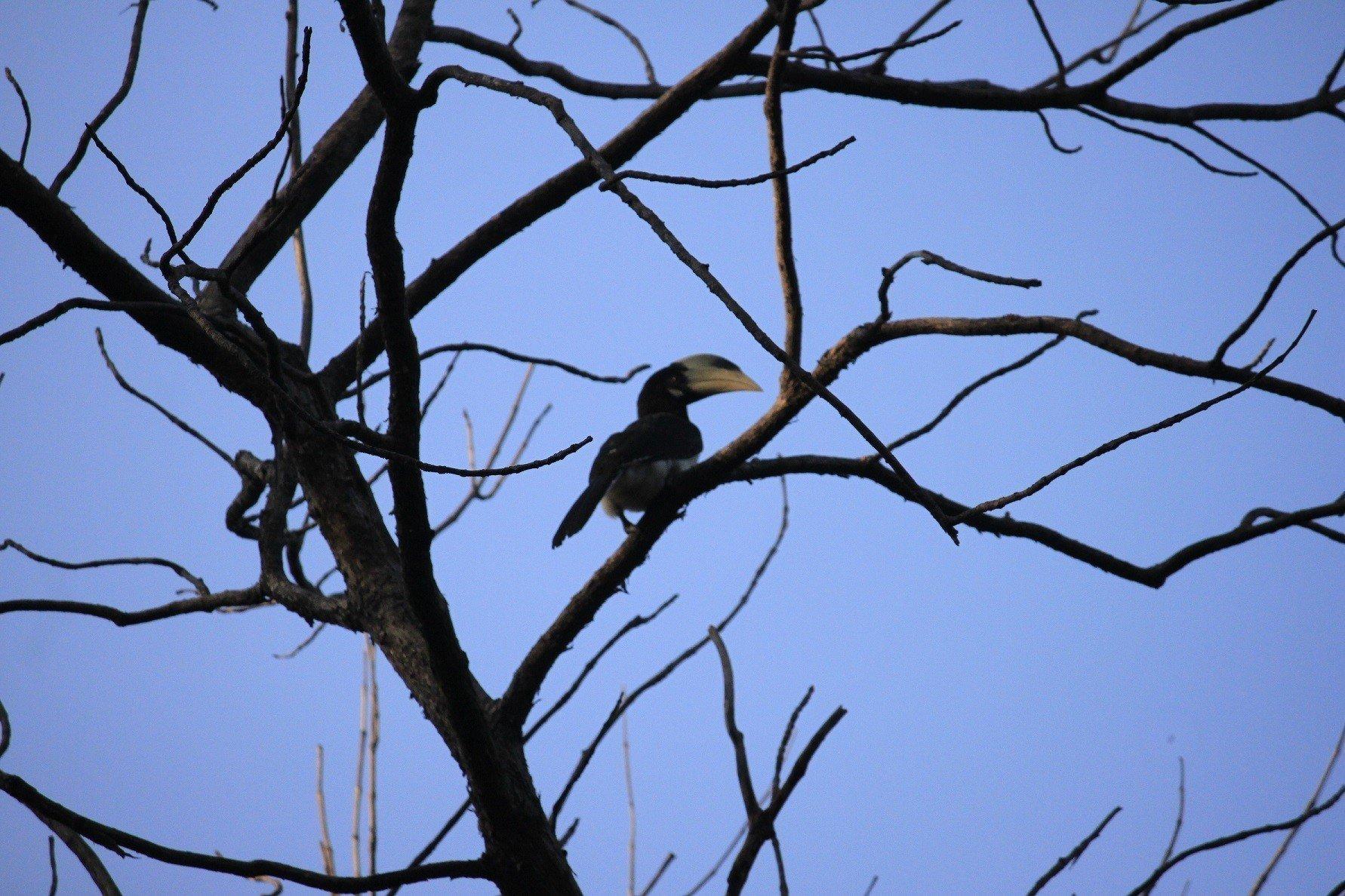 Satpura National Park-Bird