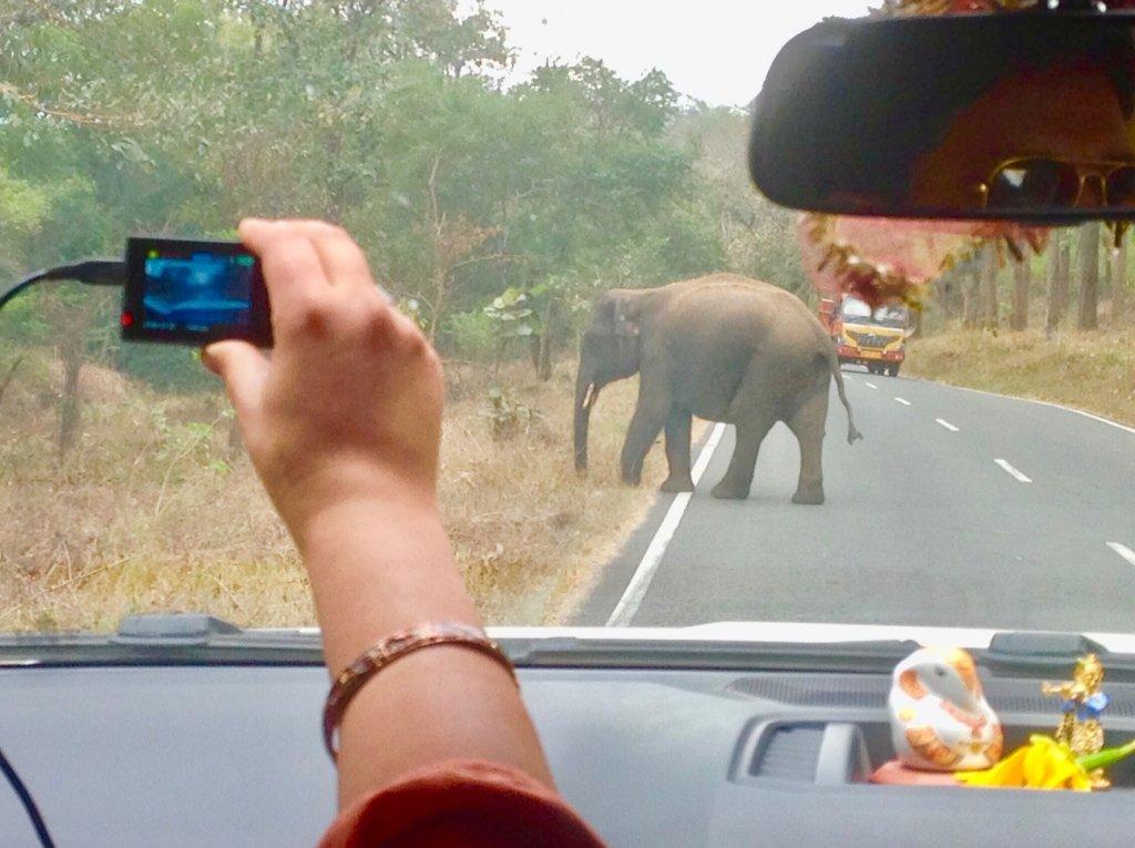 Elephant in Mudumalai Forest