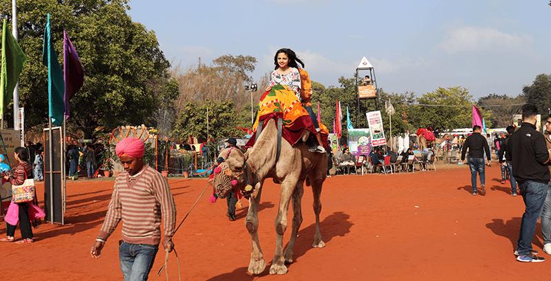 Rose garden Camel Ride