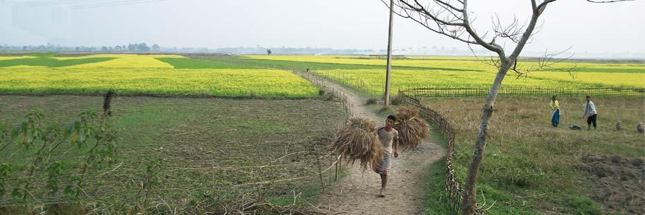 paddy-field-of-majuli