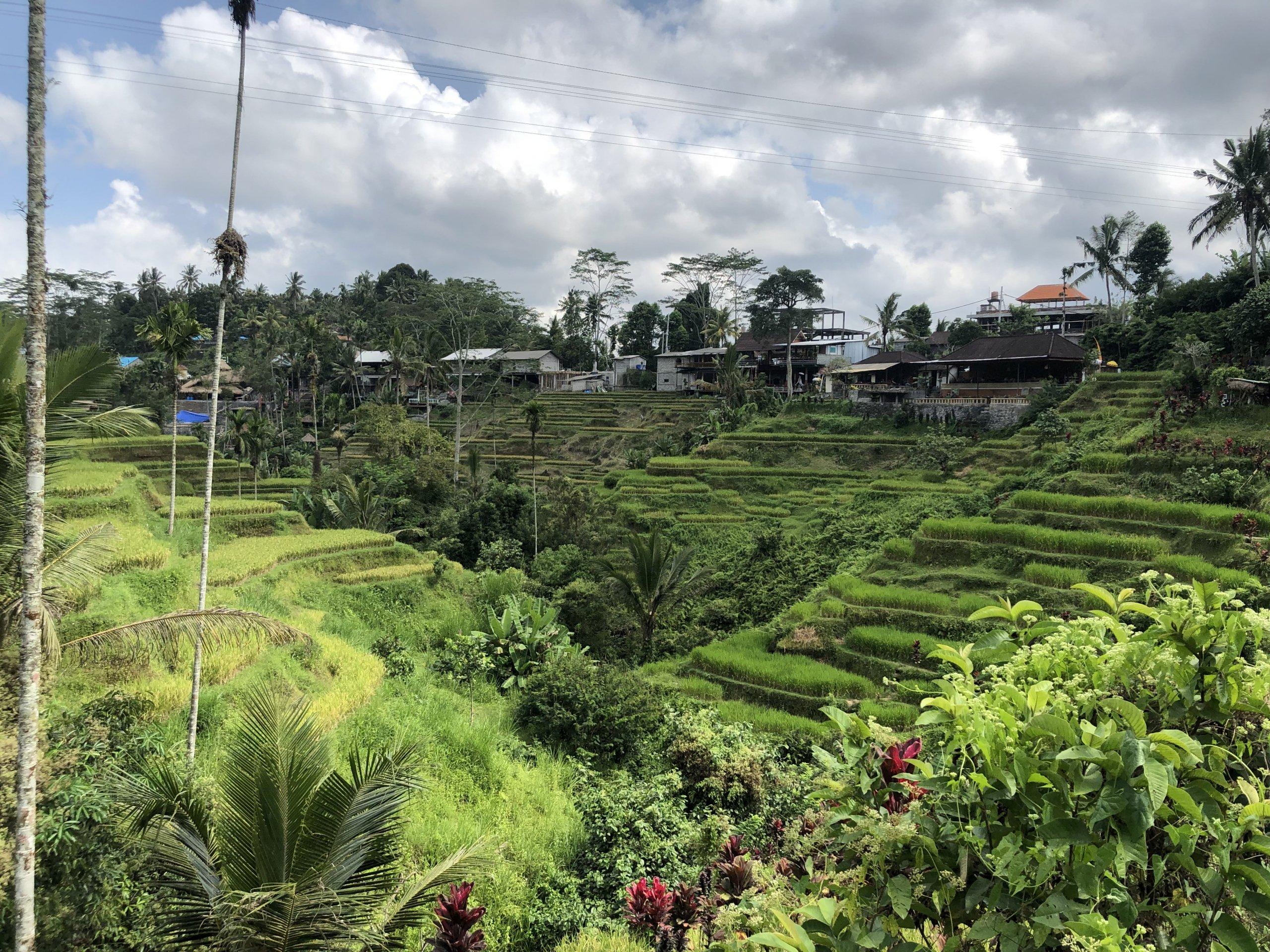 Tegalalang rice terrace-Bali travel guide